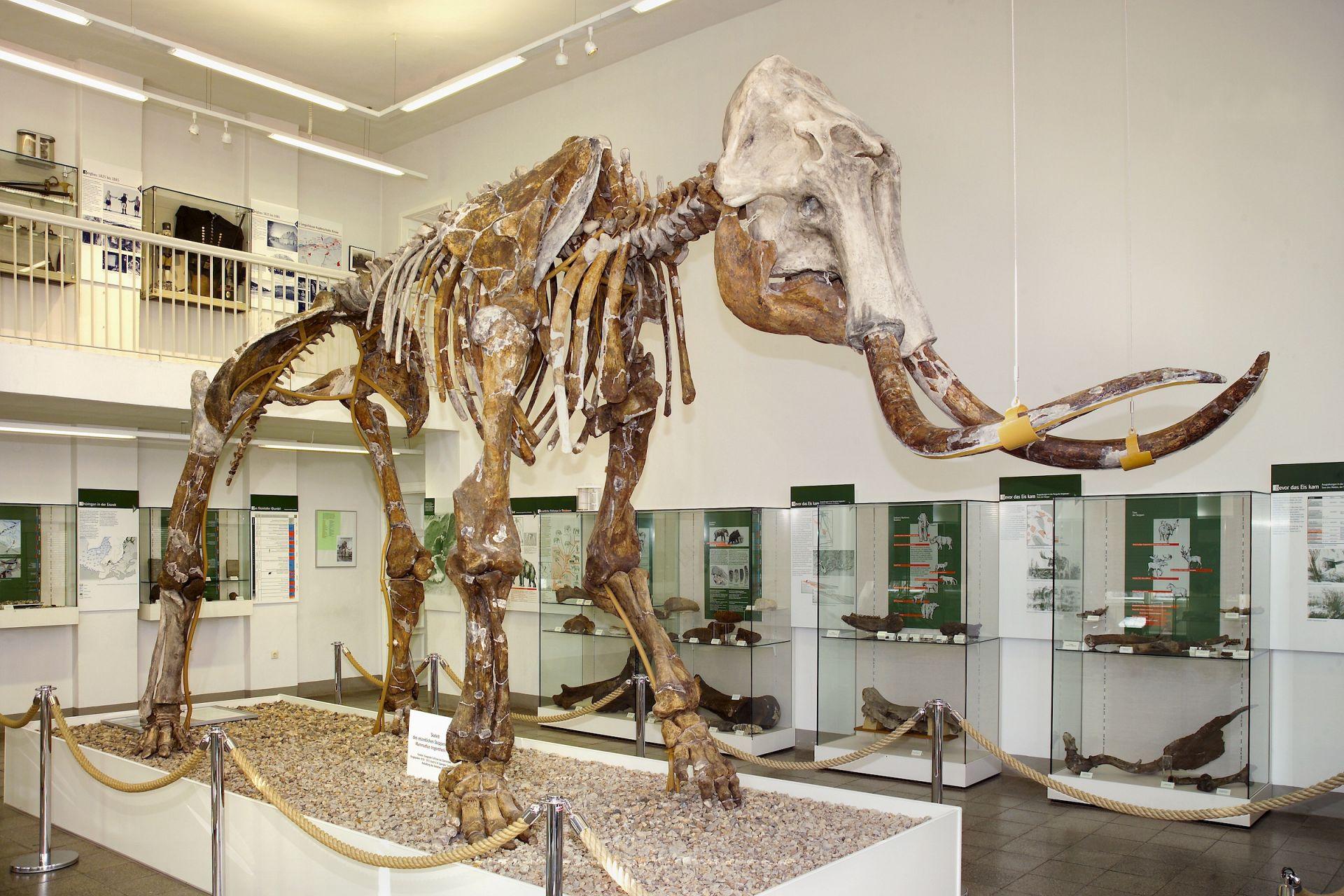 Spengler-Museum